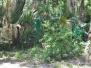 Tomoka State Park, Florida